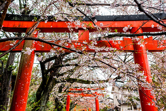 Takenaka Inari Jinja Shrine gates